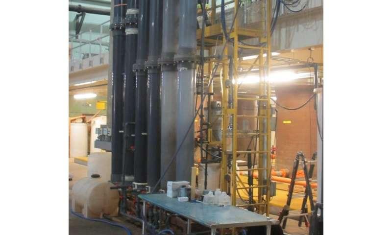 Binge-eating bacteria extract energy from sewage