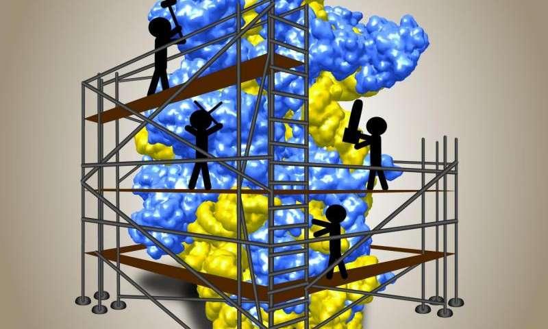 Biochemists gain new insights into biogenesis of ribosomes