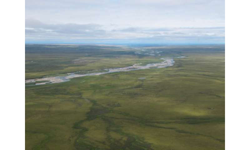 Biomass offsets little or none of permafrost carbon release