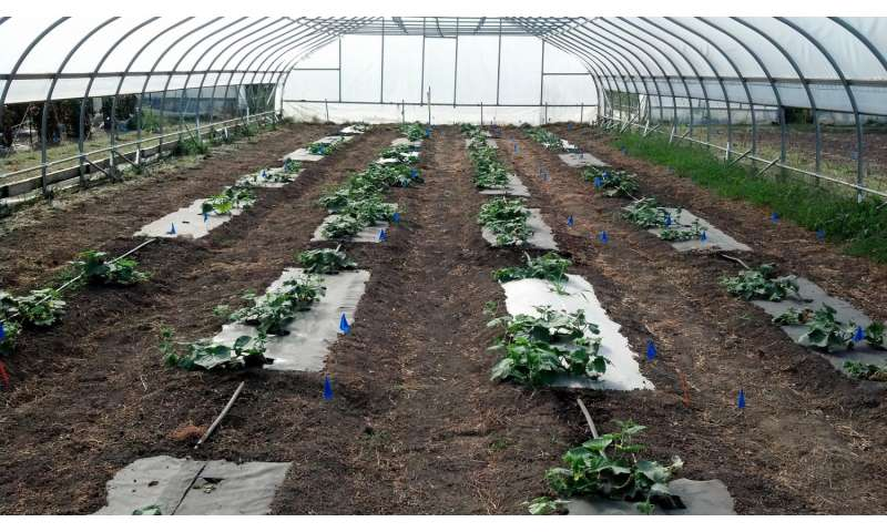 Bioplastic and biofabric tested for cucumber production