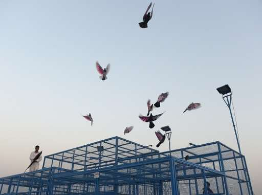 Bird cages and enthusiasts can be found on rooftops in the old districts of cities across the country