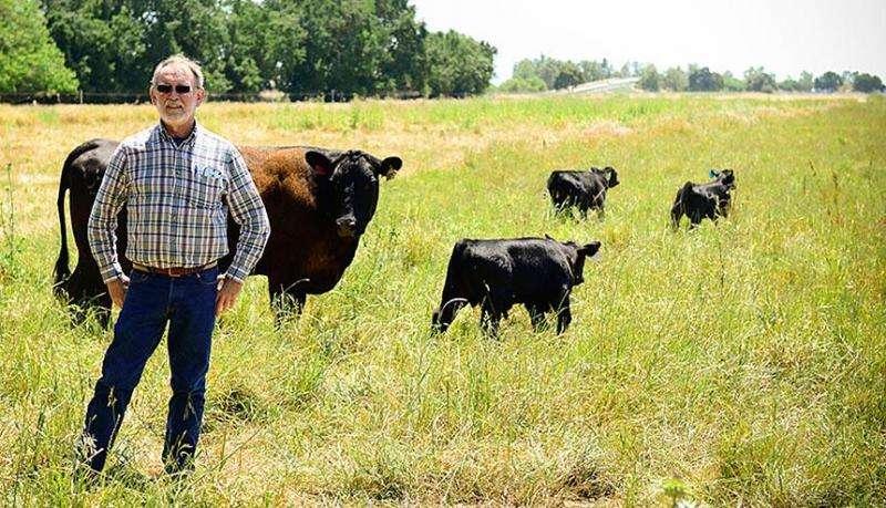 Bizarre bacteria causing major cattle disease genetically characterized