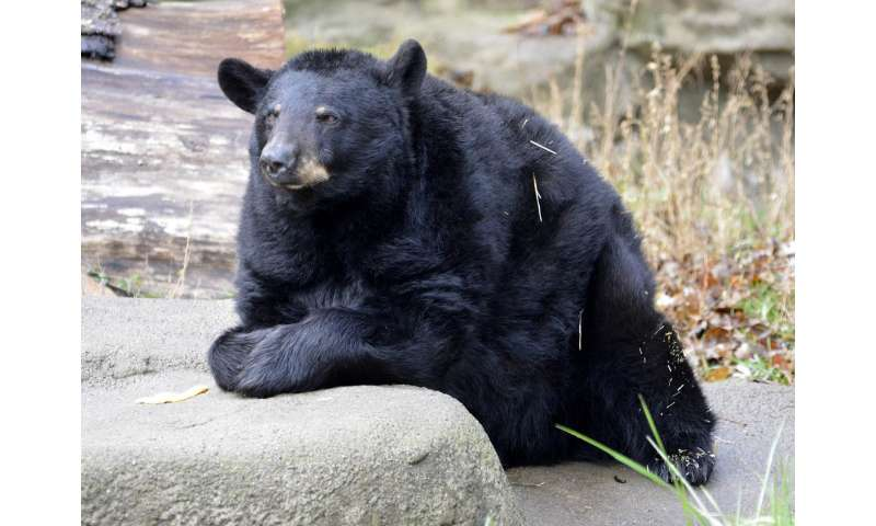 Black bear links real objects to computer images