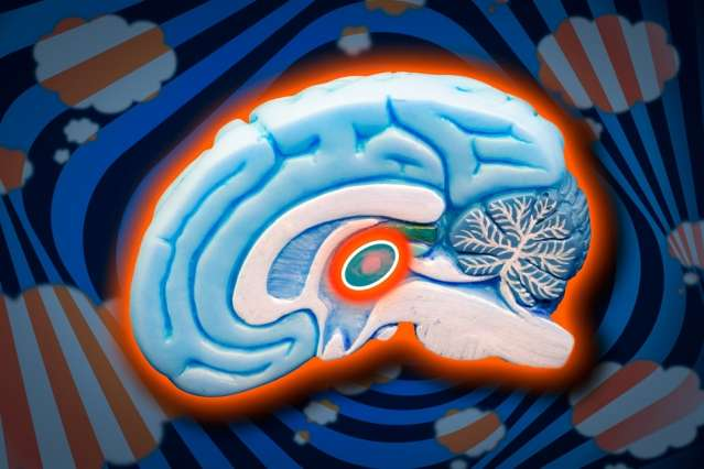 Boosting thalamic reticular nucleus function to treat ADHD and other disorders