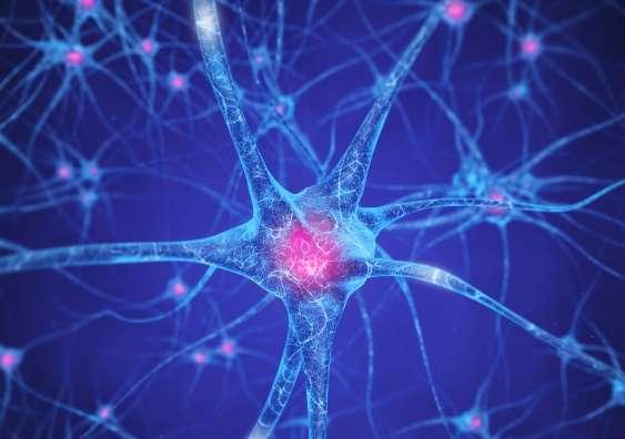 Understanding Brain Mechanisms Of >> Brain Mechanisms In Drug Addiction New Brain Pathways Revealed