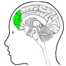 Brain's prefrontal lobe is major player in Parkinson's Gait