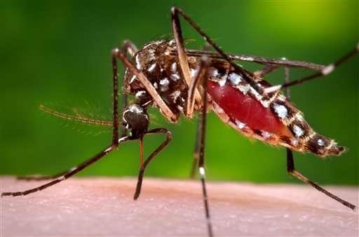 Brazil to fund development of vaccine for Zika virus