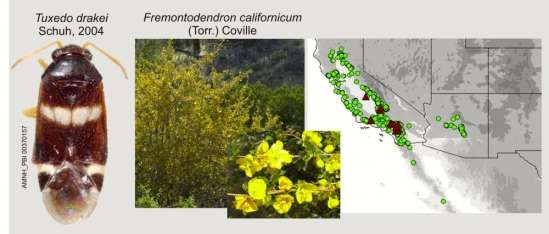 Bug collecting: Researchers map North American groups of plant-feeding insects