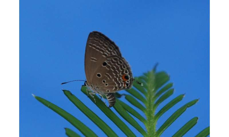 Butterfly mother's food choice for offspring changes with experience