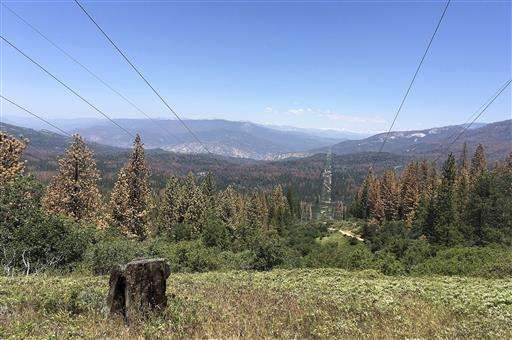 California to fire up burners to battle dead tree epidemic
