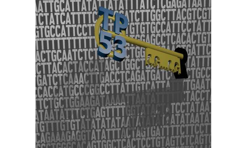 Cancer-preventing protein finds its own way in our DNA