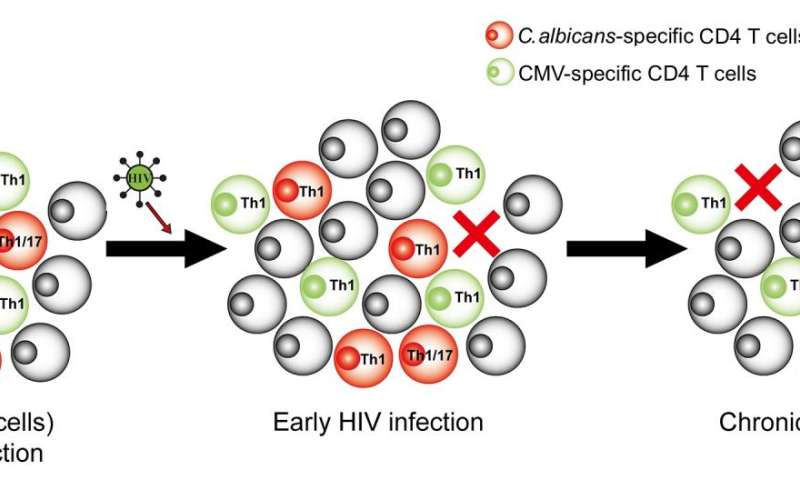 Candida-specific helper T cells are preferential and early targets of HIV