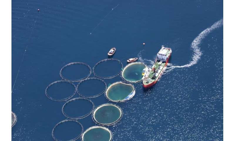 Can farmed fish feed the world sustainably?