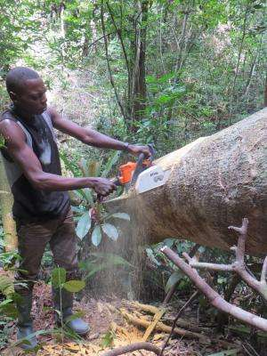 Carbon emissions from logging debris in Africa may be vastly underestimated