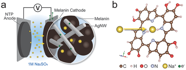 Carnegie Mellon researchers discover melanin could make for great batteries