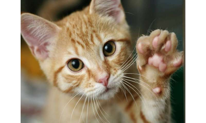 Cat Scratch Can Sometimes Lead To Serious Illness Cdc