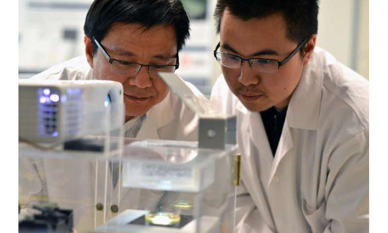 Cell research could help with heart tissue transplants