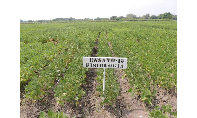 Characteristics improving bean resistance to drought identified