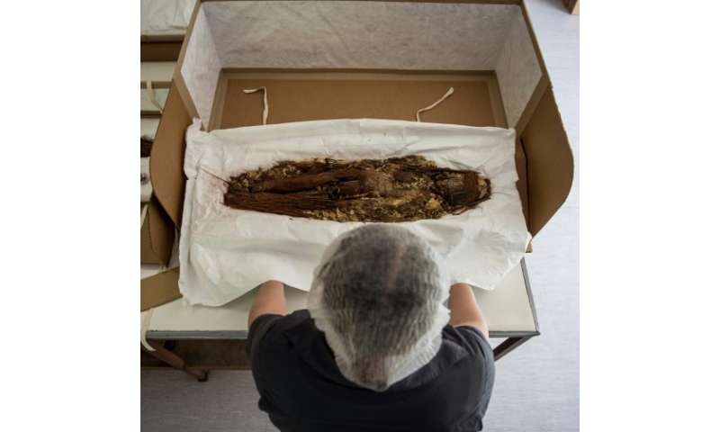 Chilean anthropologist Veronica Silva shows one of the mummies from the ancient Chinchorro culture at the National Museum of Nat