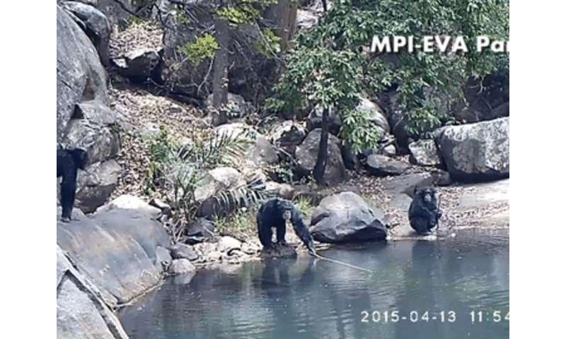 Chimpanzees routinely fish for algae during the dry season in Bakoun, Guinea
