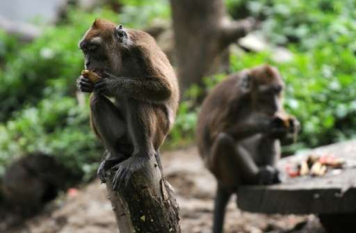 Chinese scienties used macaques to study autism