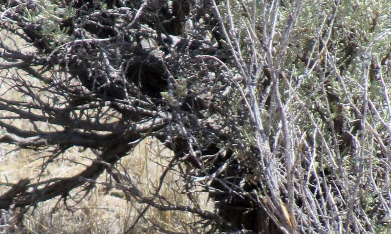 Choosy sage-grouse select nest sites to maximize their success