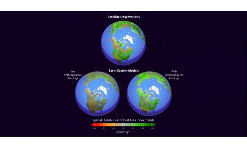 Climate study finds human fingerprint in Northern Hemisphere greening