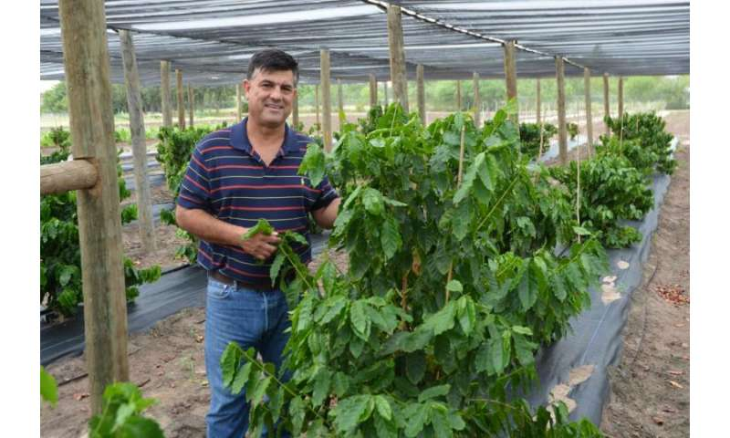 Coffee farm thriving in the Rio Grande Valley