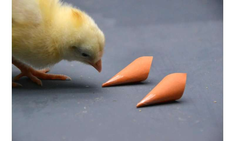 Color vision helps birds find good food and the right partner