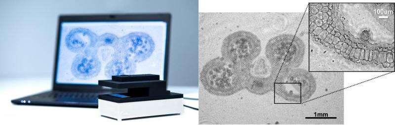 Compact lens-free digital microscope