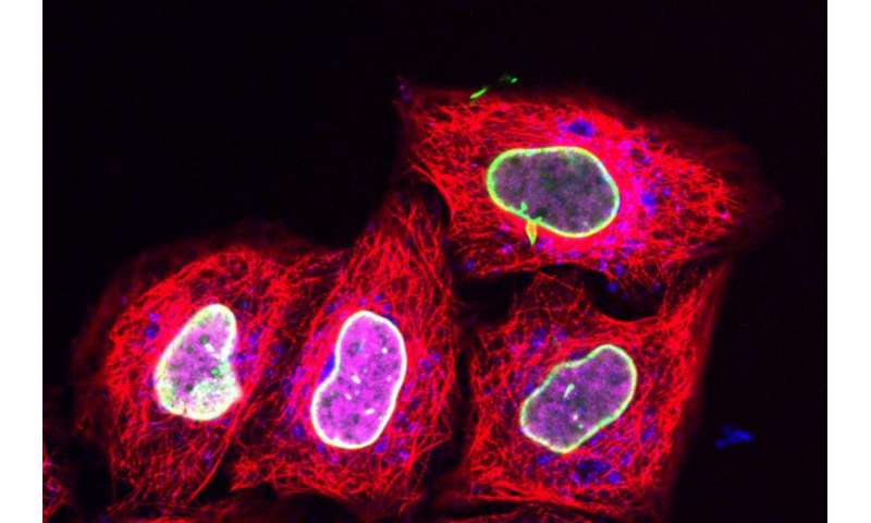 Compressing cells allows delivery of new fluorescent tags to track proteins in living cells