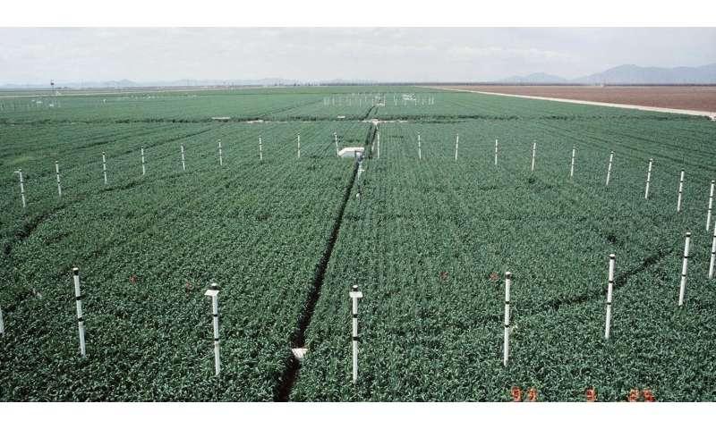 Could global warming's top culprit help crops?
