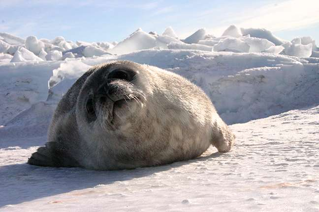 Count seals in Antarctica from the comfort of your couch