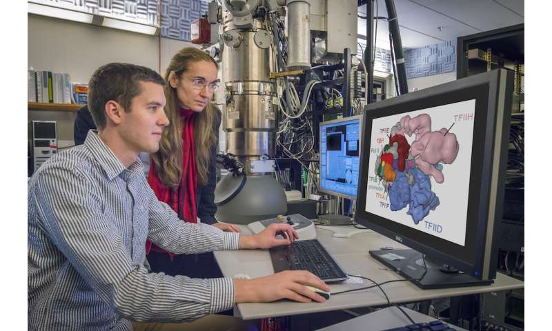Cryo-EM's renaissance: NERSC resources help illuminate human molecular machinery