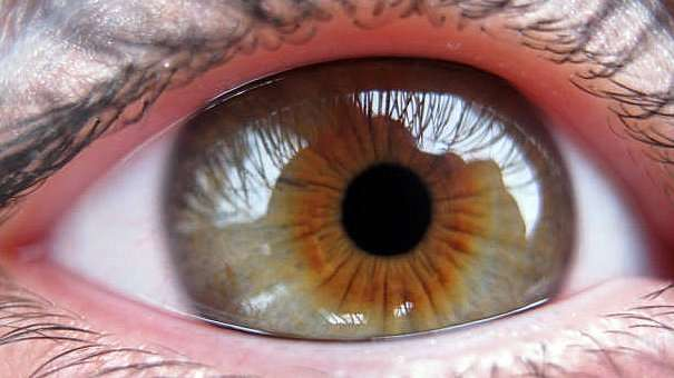 Dartmouth study helps fill in gaps in our visual perception
