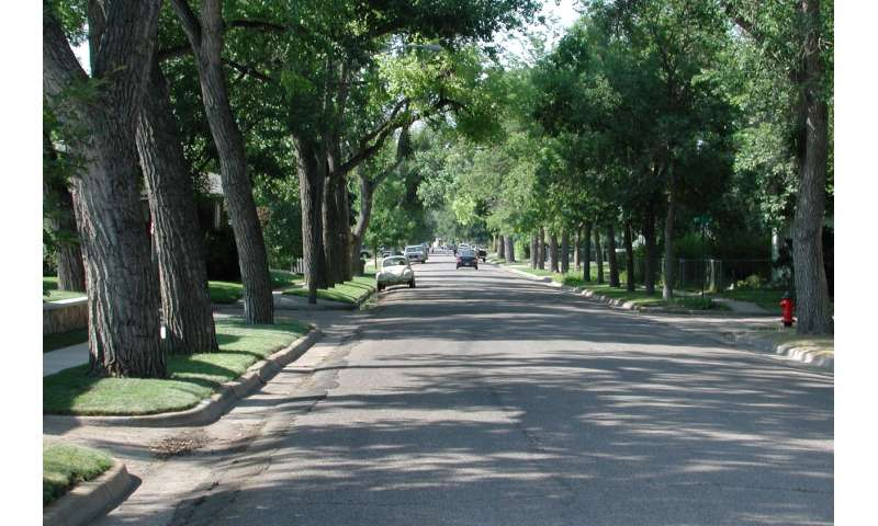 Database captures most extensive urban tree sizes, growth rates across United States