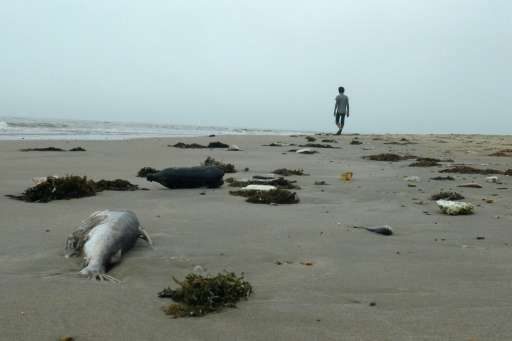 Dead fish and other marine life began washing ashore in central Vietnam in April, the country's worst ecological disaster in dec