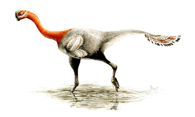 Deceptive feathered dinosaur finally gets a name