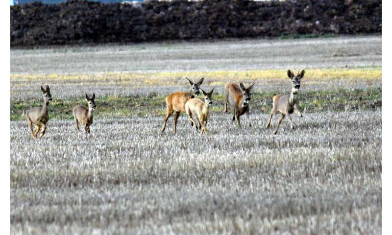 Deer make collision-free escapes thanks to inbuilt 'compasses'