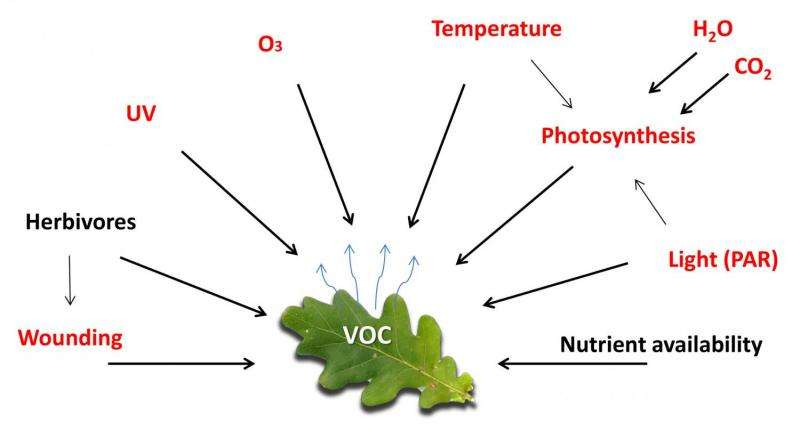 De-mystifying the study of volatile organic plant compounds