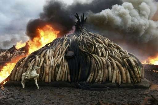 58763da83d270a Despite measures such as the Kenyan government s burning of tusks