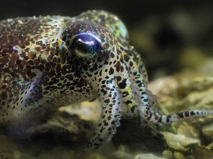 the bright and misunderstood world of the cephalopods With new research, marine biologists come closer to understanding how cuttlefish—and other cephalopods—control their colorful skin displays.