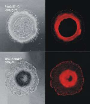 Detecting changes in cell differentiation and migration during embryonic development