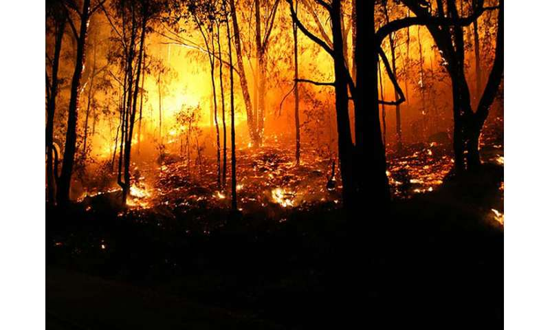Devastating wildfires in Eastern forests likely to be repeated, expert warns