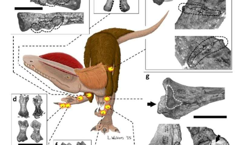 Dinosaur had record number of bone problems and lots of pain