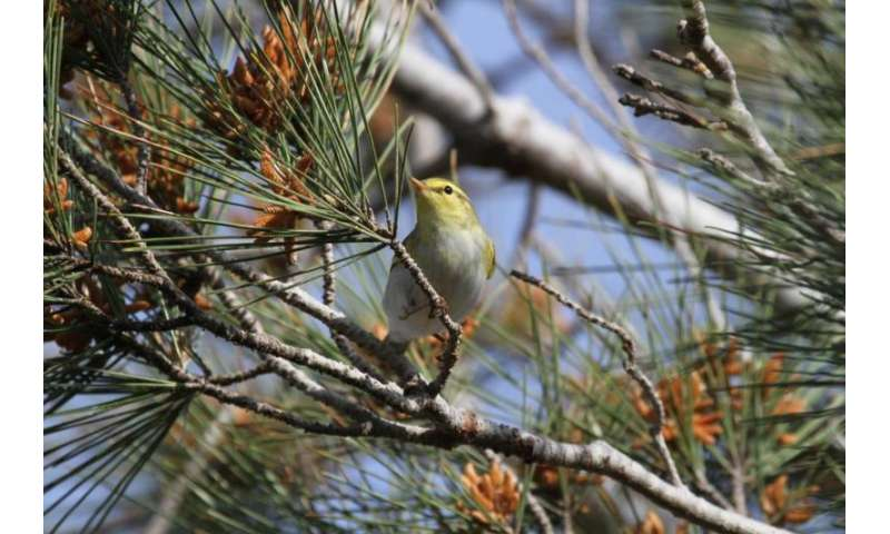 Diverse migration helps birds cope with environmental change
