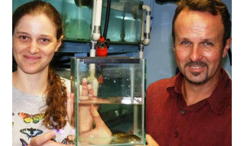 DNA work saves fish from extinction