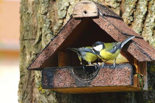 Do female birds mate with multiple males to protect their young?