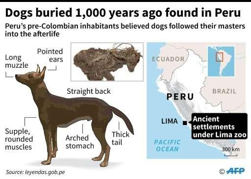Dogs buried 1,000 years ago found in Peru