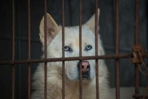 Dogs sit in a cage as they are rescued from a dog meat farm by the US-based Humane Society International in Wonju